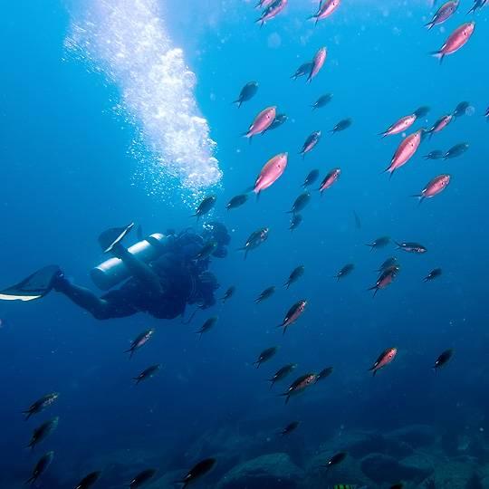 Découvrez les fonds marins corses réputés dans le monde pour leur diversité