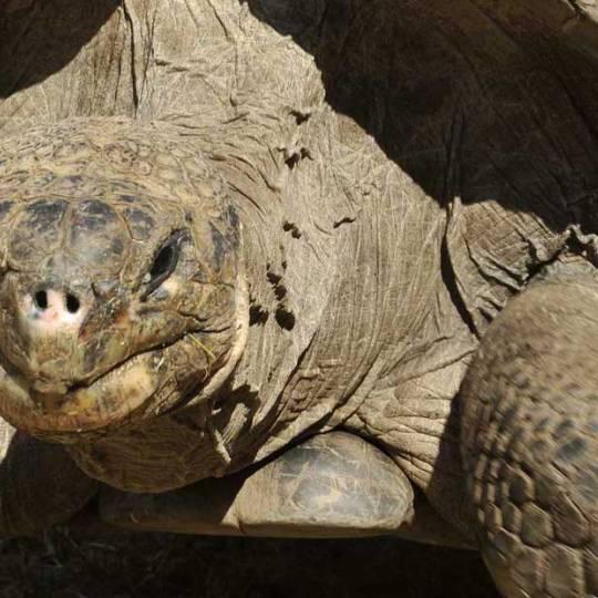 Découverte en Corse de la plus grande réserve de tortues d'Europe